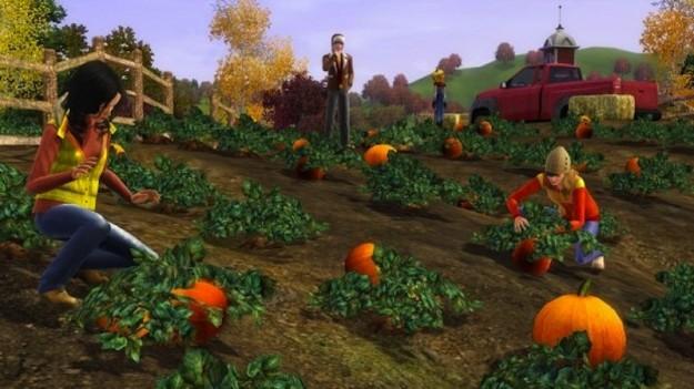 Campo di zucche