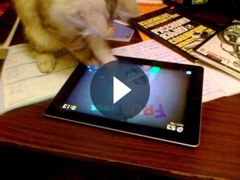 Giochi per iPad: il gatto che gioca a Fruit Ninja